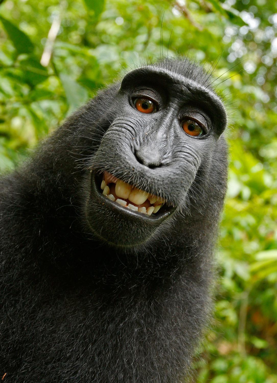 Abe-selfie